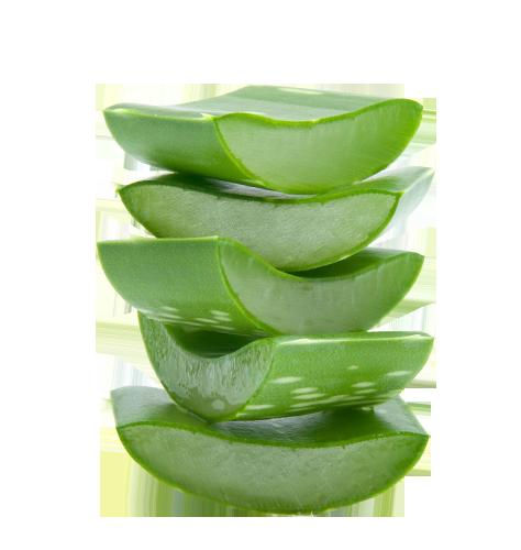 Aloe barbadensis_miller